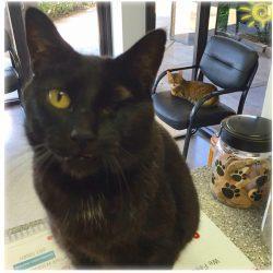 Tulsa veterinary services: Paw Prints Ltd