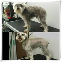 Tulsa Grooming Services