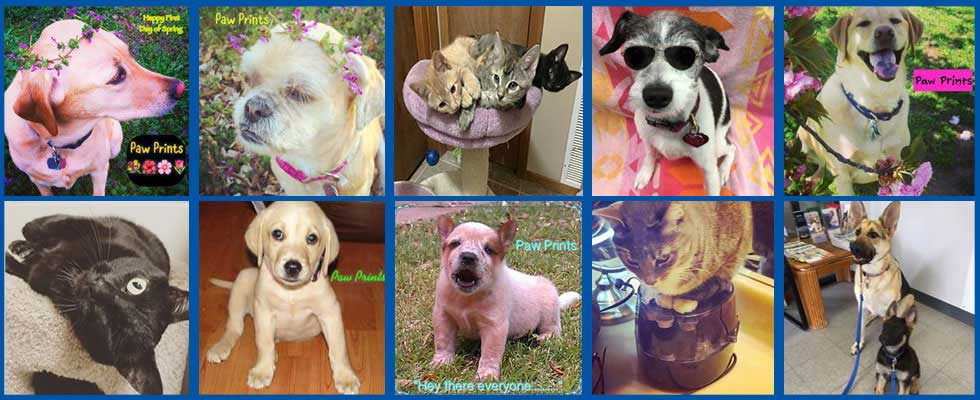 Tulsa veterinary services