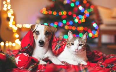 Keeping your pet safe this holiday season