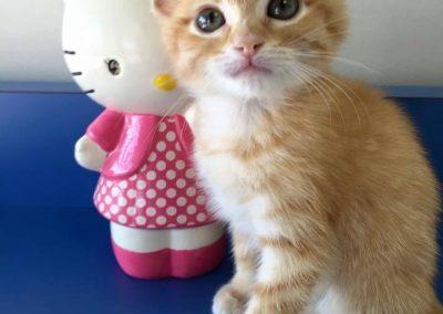 Paw Prints Ltd-Kittens