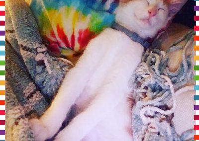 Paw Prints Ltd.-cats