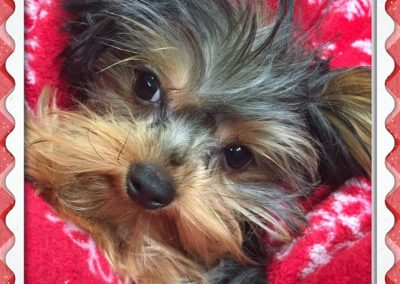Paw Prints Ltd.j-puppy care