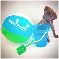 Paw Prints Ltd4