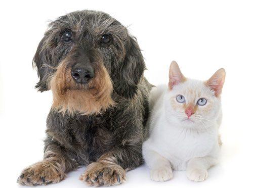 Senior Pet Wellness Month!