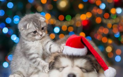 Keep Your Pets Safe This Holiday Season.